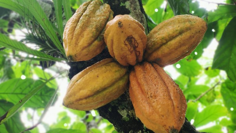 Tree-to-bar from Meybol Cacao